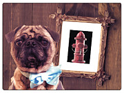 Pug Framed Prints - The Artist and His Masterpiece Framed Print by Edward Fielding