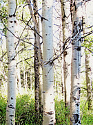 Abigail Ellison - The Aspens #2