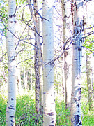 Abigail Ellison - The Aspens #4
