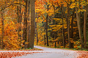 Gelderland Prints - The Autumn Road Print by Martin Bergsma