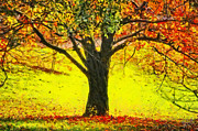 Wooded Digital Art Framed Prints - The Autumn Tree Framed Print by Nishanth Gopinathan