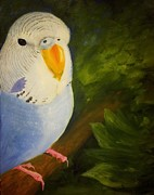 Elizabeth Edwards Prints - The Baby Parakeet - Budgie Print by Abbie Shores