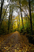 Old Country Roads Metal Prints - The Back Roads of Autumn Metal Print by David Patterson