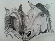 Wild Horse Drawings - The Back Scratchers by Rachel Dubber