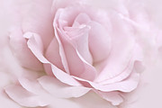 The Ballerina Pink Rose Flower Print by Jennie Marie Schell