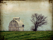 Iowa Photos - The Barn and Tree by Cassie Peters