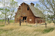 Daysray Prints - the Barn  Print by Fran Riley