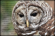 Tammy Schneider - The Barred Owl..Poem by...