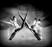Black And White Conceptual Art - The Battle by Photodream Art