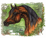 Horse Drawings - The Bay Arabian Horse 1 by Angel  Tarantella