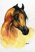 Watercolor Drawings Framed Prints - The Bay Arabian Horse 14 Framed Print by Angel  Tarantella