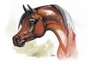 Bay Horse Drawings - The Bay Arabian Horse 15 by Angel  Tarantella