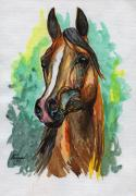 Horse Drawings - The Bay Arabian Horse 2 by Angel  Tarantella