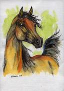 Bay Drawings Framed Prints - The Bay Arabian Horse 5 Framed Print by Angel  Tarantella