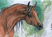 Horse Drawings Originals - The Bay Arabian Horse 6 by Angel  Tarantella