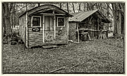 Shack Photos - The Bear Pen by Thomas Young