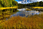 Fir Trees Photos - The Beautiful Fly Pond Near Old Forge New York by David Patterson