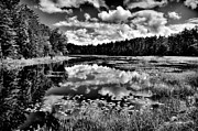 Fir Trees Photos - The Beautiful Fly Pond on Rondaxe Road - Old Forge NY by David Patterson