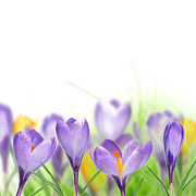 Delivery Flowers Prints - The Beautiful Spring Flowers Print by Boon Mee