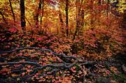 Saija  Lehtonen - The Beauty of Autumn
