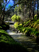 Sun Studio Photos - The Beauty Of Cumanda Creek In Cuenca by Al Bourassa