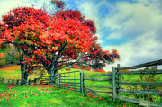 Gate Prints Prints - The Beauty of Fall II - Blue Ridge Parkway Print by Dan Carmichael