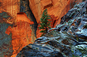 Winter Travel Prints - The Beauty Of Sandstone Print by Bob Christopher