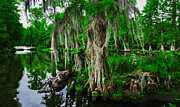 South Carolina Prints - The Beauty of the Swamp Print by Ryan Manuel