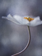 Flower Head Photos - The Beauty Within by Priska Wettstein