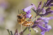Bee Photos - The Bees Knees by Caitlyn  Grasso
