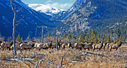 Elk Photographs Photo Prints - The Best Day Ever Print by Don Ellis
