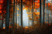 Ildiko Neer - The Best Days