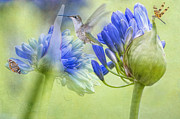 Agapanthus Framed Prints - The best way to keep love is to give it wings Framed Print by Bonnie Barry