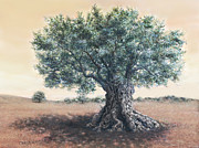 Jerusalem Drawings Posters - The Biblical olive tree Poster by Miki Karni