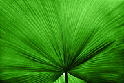 The Big Green Leaf Print by Natalie Kinnear