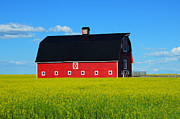 Yelow Framed Prints - The Big Red Barn Framed Print by Bob Christopher