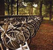 Fall Leaves Prints - The Bikes of Kroller Muller and National Park De Hoge Veluwe Print by Mary Machare