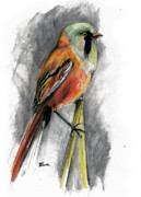 Bird Drawings Originals - The Bird by Angel  Tarantella