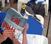 Tom Wolfe Photos - The Bird Brain by Madeline Ellis