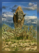 Bison Photos Posters - The Bison-Buffalo Poster by Blake Richards