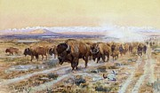 Reproduction - The Bison Trail
