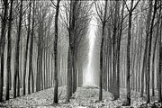 Arie Arik Chen Framed Prints - The black-and-white forest  Framed Print by Arie Arik Chen