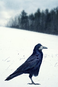 Birding Photo Prints - The Black Crow Knows Print by Edward Fielding