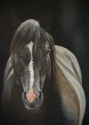 Black Horse Pastels Prints - The Black Print by Joni Beinborn
