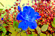 Rose Prints - The Blue Blue Rose Print by Alys Caviness-Gober