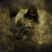 Stray Digital Art - The Blue Eyes Of A Stray Cat by Alice Van der Sluis