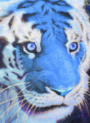 Color Pencils Framed Prints - The Blue Tiger Framed Print by Moustafa Al-Hatter