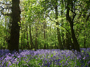 Katharine Green - The Bluebell Wood