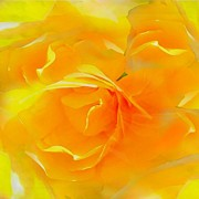 Blushing Posters - The Blushing Yellow Rose Abstract 2 Poster by Becky Lupe