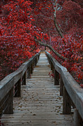 The Nature Center Photo Posters - The Boardwalk Poster by Douglas Barnard